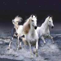27 x 27 full square drill diamond painting BESTS-054 wild horses