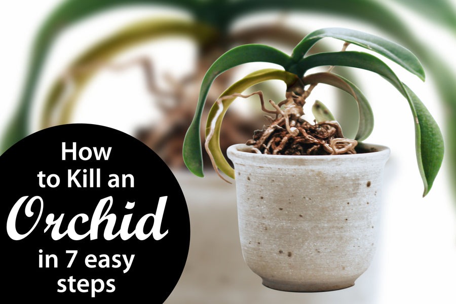 How to Kill an Orchid in 7 easy steps