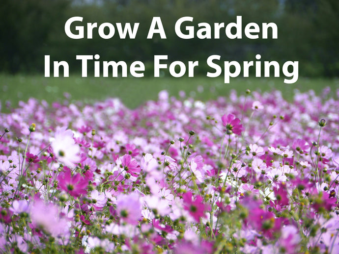 Grow A Garden In Time For Spring