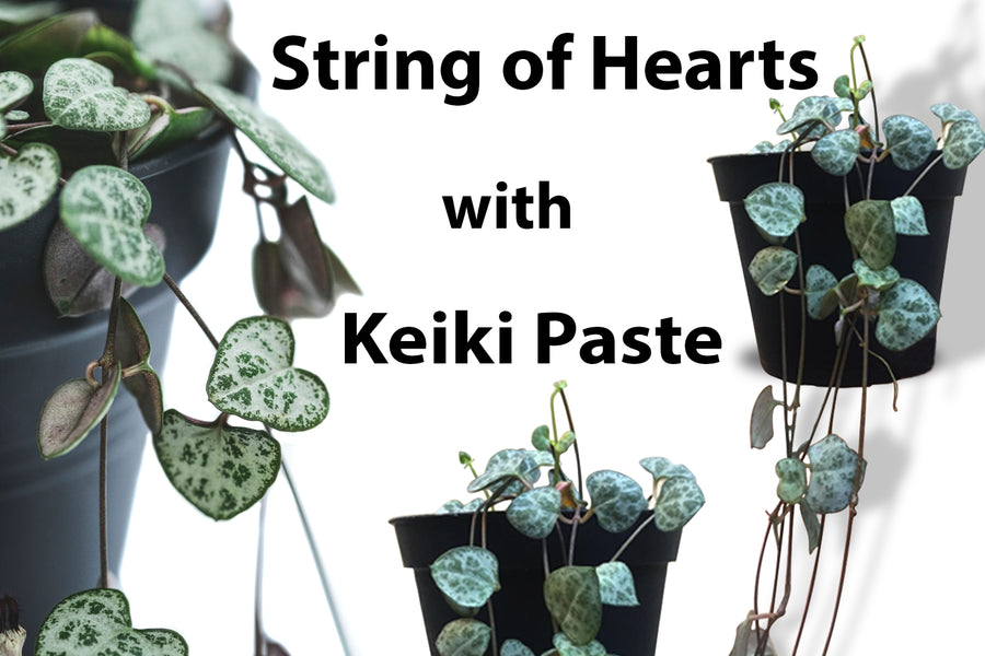 I ♡ Keiki: Keiki paste for your String of hearts