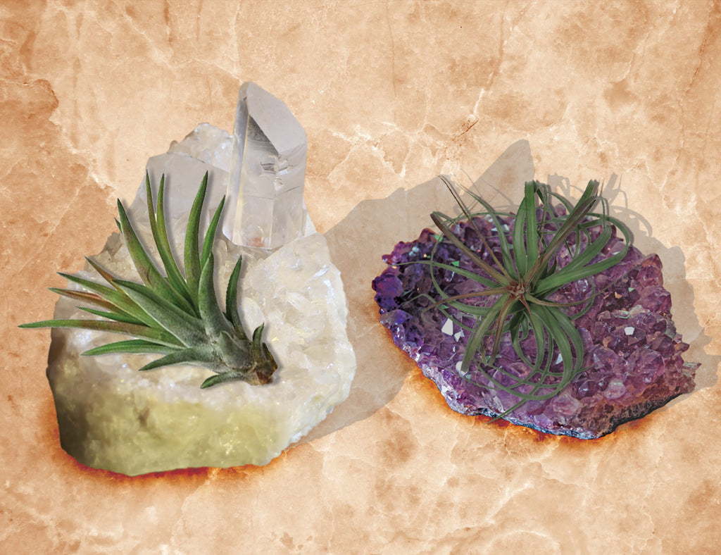air plant - crystals ans geodes