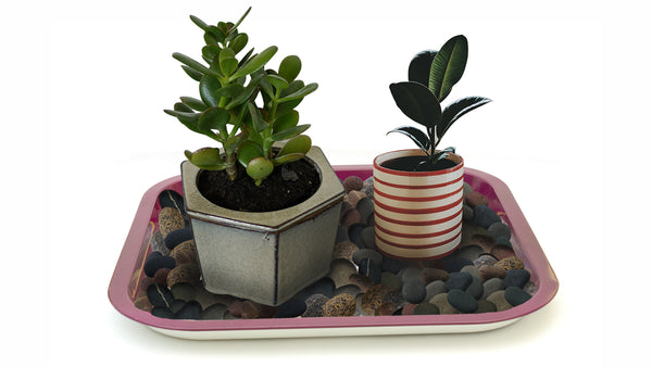 Houseplant on a tray