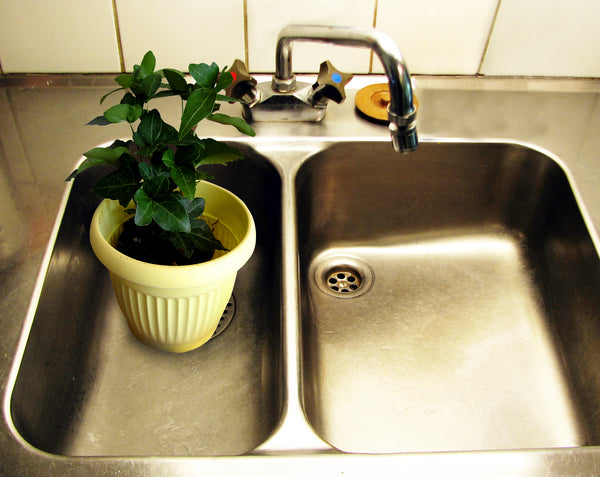 Houseplant on a sink