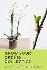 Grow your Orchid Collection