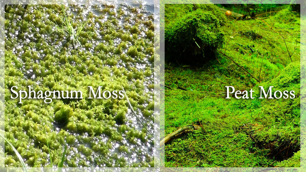 peat and sphagum moss