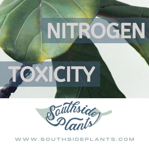 Too much Nitrogen can hurt your plants
