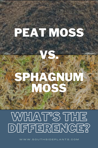 Peat Moss vs Sphagnum Moss - What's the difference