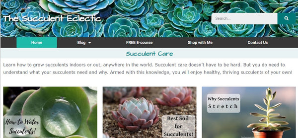 The Succulent Eclectic