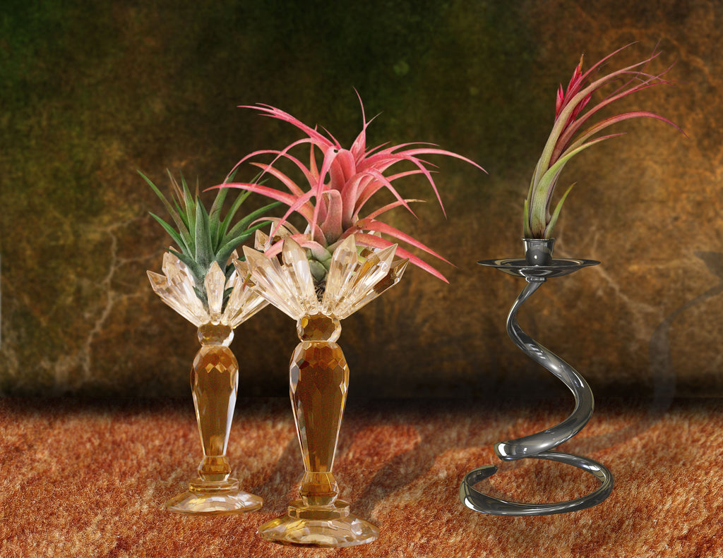 air plant - candle holder