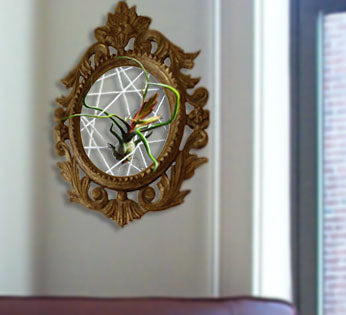 air plant - old frame