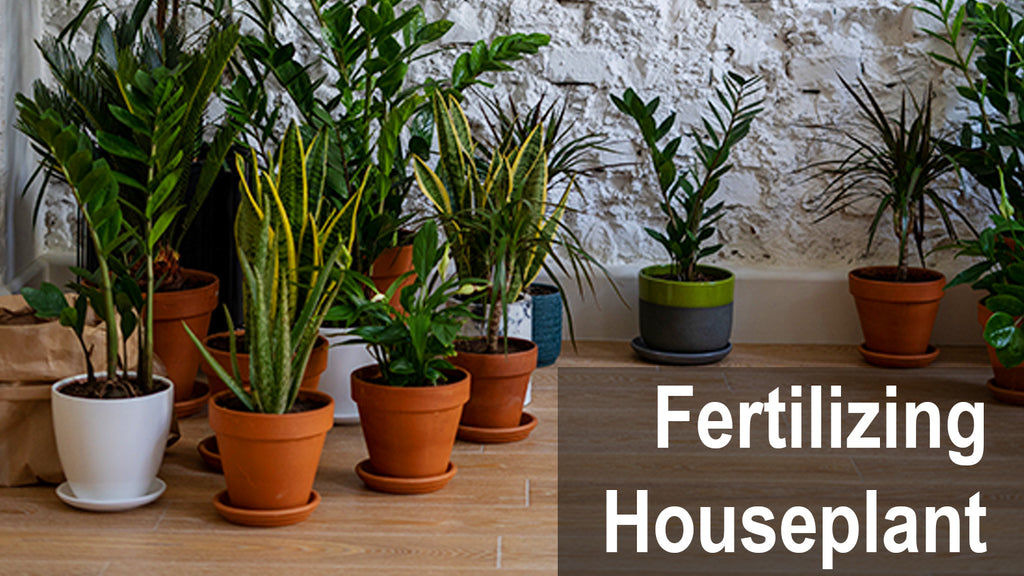 Fertilizing Houseplants