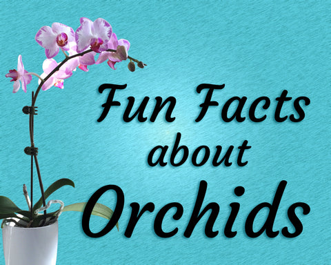 Fun Facts about Orchids