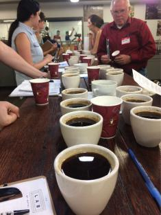 NYC Cupping