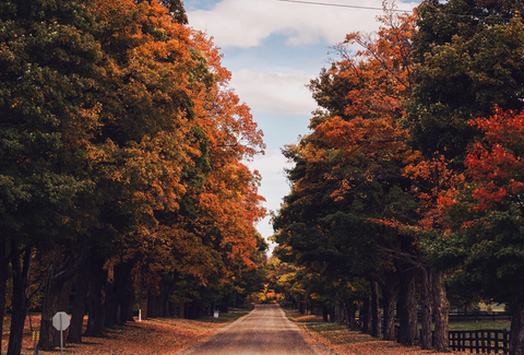 Country road with trees turning colors for the fall