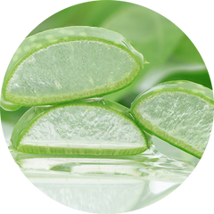 Aloe Vera has multiple health and skin care benefits