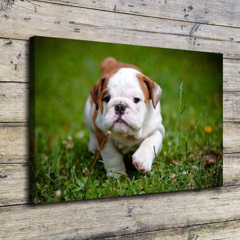 1 Piece Cute Pit bull Puppy Animal Modern Decor Canvas Wall Art HD Print