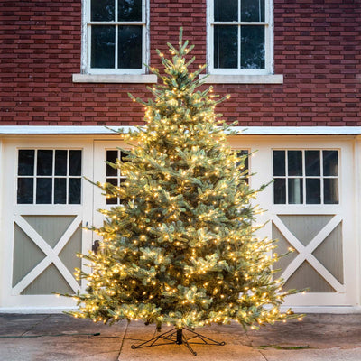 12' Park Hill Blue Spruce LED-Iron Accents