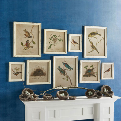 Bird Print Gallery (Set-9) | Iron Accents