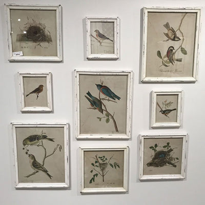 Bird Print Wall Gallery (Set-9)