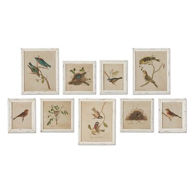 Wall Decor Bird Print Gallery (Set-9)