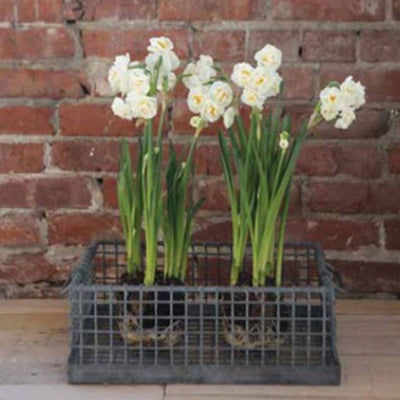 Found Vintage Tulip Crate | Iron Accents
