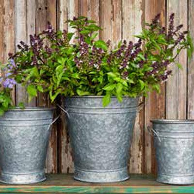 Wide Mouth Flower Buckets | Iron Accents