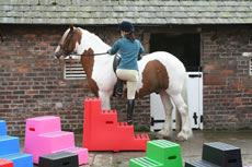 Classic Showjumps Premium Mounting Block One Tread Pink