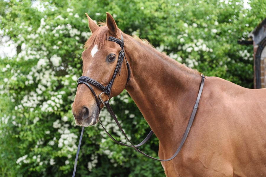 White Horse Equestrian Flash Vault Bridle Brown