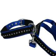 White Horse Equestrian Kalb Collar and Lead Set Purple