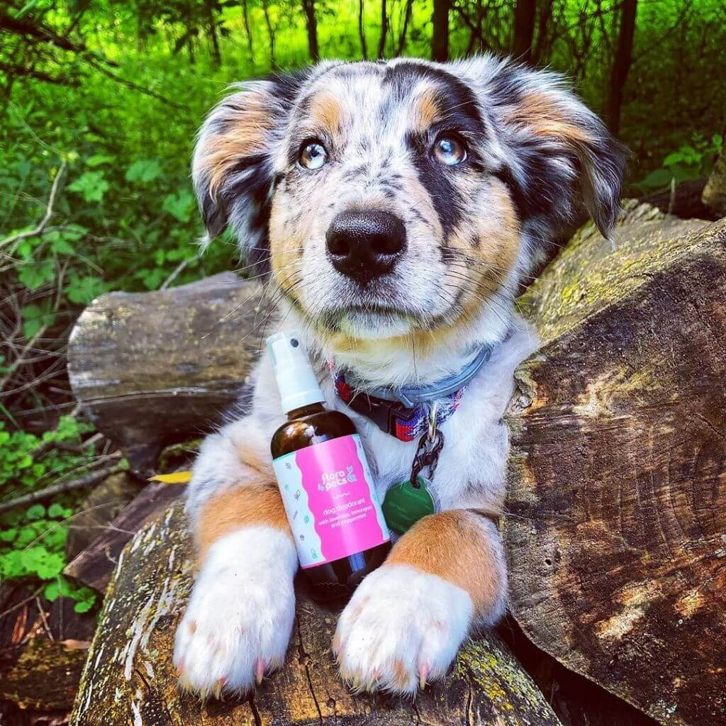Best dog deodorant spray, cute dog in the forest