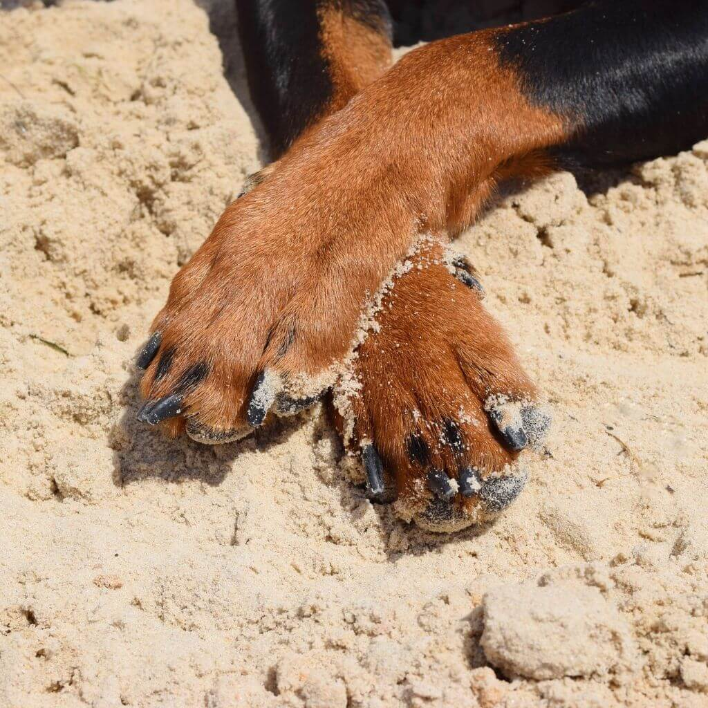 Prevent burned dog paws