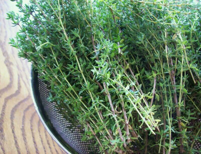 Benefits of thyme for dogs