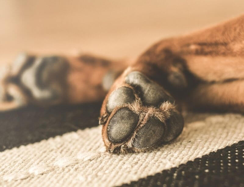 How to prevent dry dog paws
