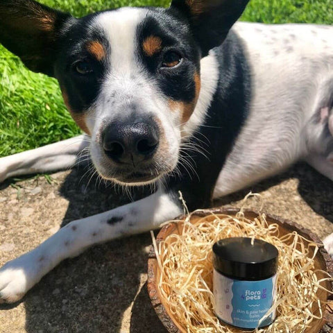 Skin & paw healing balm with marigold and chamomile