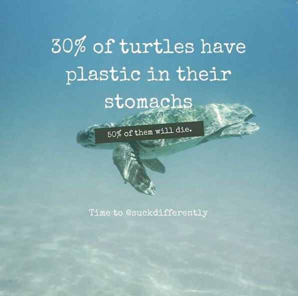 30% of turtles have plastic in their stomach. Of these 50% will die.