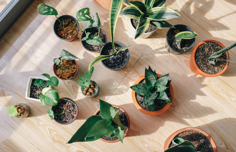 4 Most Efficient Indoor Plants For Every Household