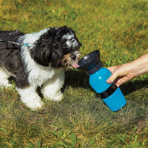 Outdoor Pet Mug - MEKONGOOD.COM