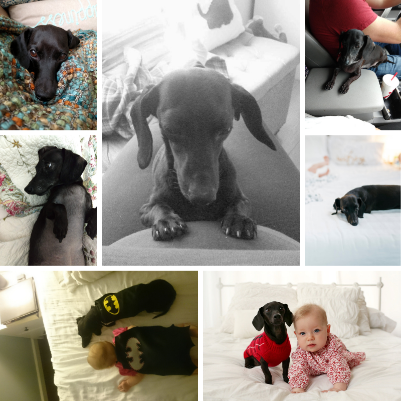 collage of puppy pictures