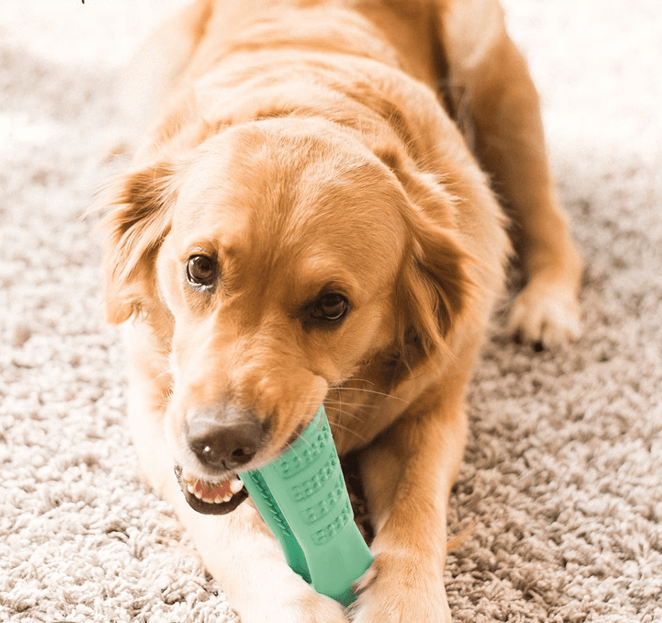 Dog Chewing Brush - agitra