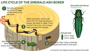 Ash Borer Be Gone ™ Safely promotes healing of the whole tree from the Ash Borer. All organic plant ingredients. 60 ml  2 oz.