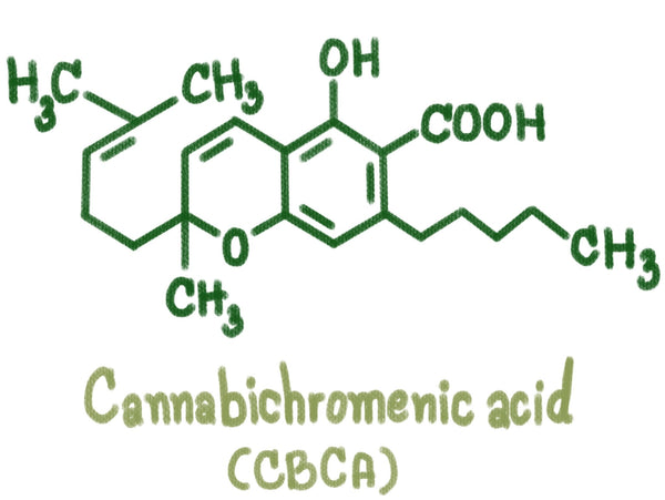 CBCA (Cannabichromenic Acid) Guide | Secret Nature