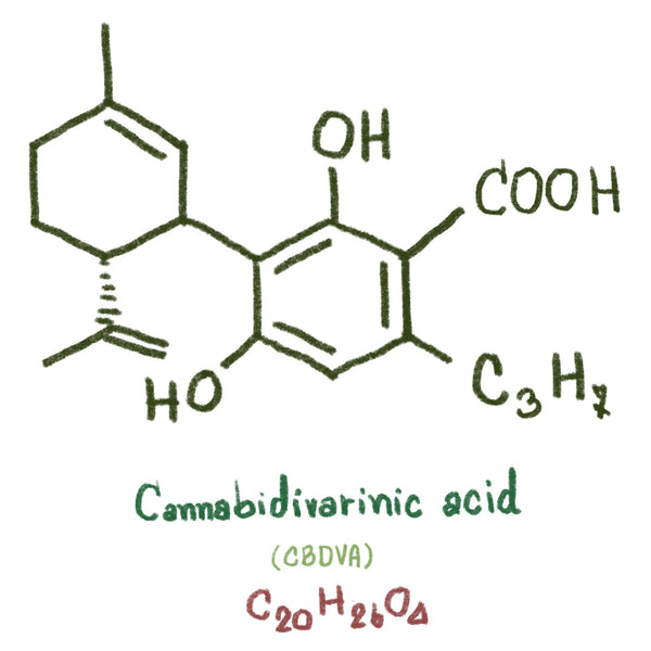 CBDVA (Cannabidivarinic Acid) Guide | Secret Nature