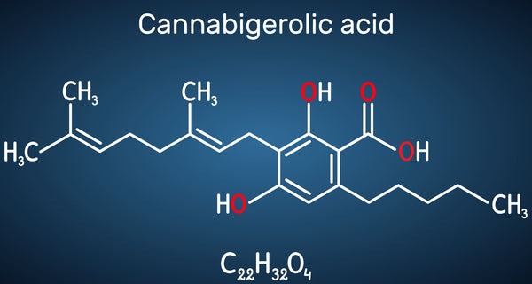 CBGA (Cannabigerolic Acid) Guide | Secret Nature