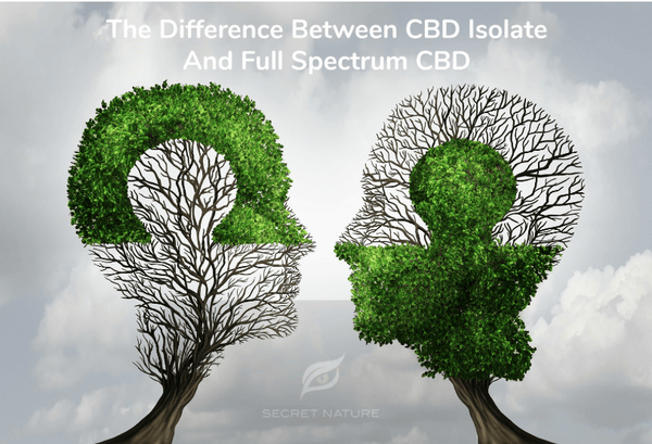 Full-Spectrum CBD vs. Isolate CBD—Why Full-Spectrum Is Better. | Secret Nature