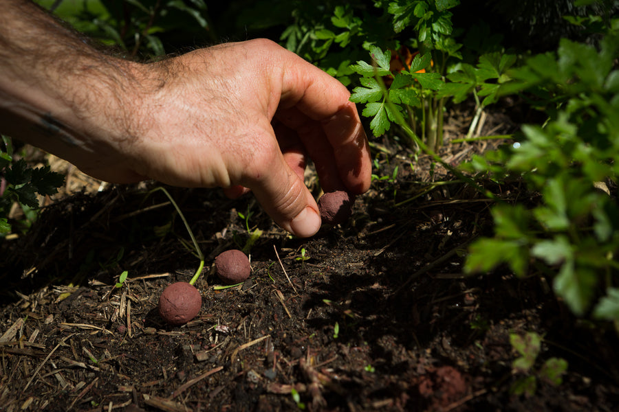 Why seed bombs are the future of gardening