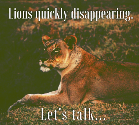lions are disappearing. let's talk...
