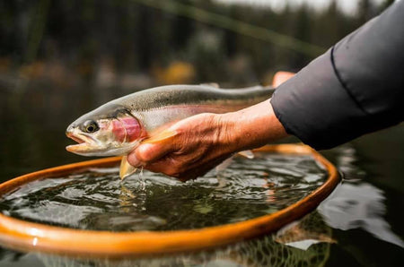 10 Essential Fly Patterns for Trout