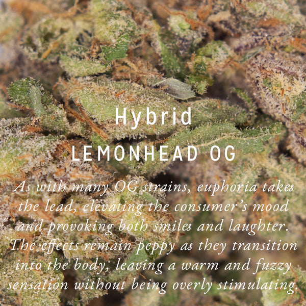 Lemonhead OG *indoor