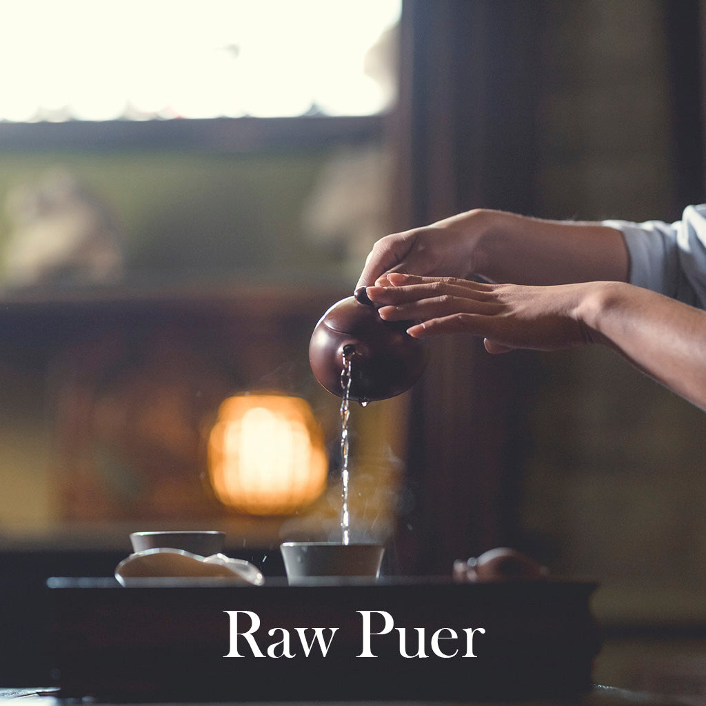 Raw Puer Tea Tasting: 'The Mountain Tour'