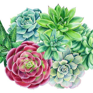 Succulent Plants DIY Full Drill Round Drill Diamond Painting